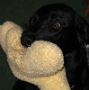 Harley with toy