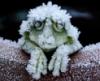 Ледяная квакуша
