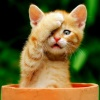 кот-фейспалм