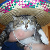 one hoopy frood: Cinco del Gato
