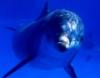 vbeelokurskiy: подводный мир