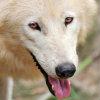 wolf_risen userpic