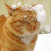 northernsnokat userpic