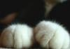 emelis_evants userpic