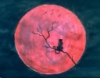 moon_red_cat