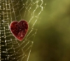 connections, web of life, web of love