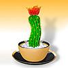 brand new kaktus