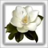 magnoliaregia userpic