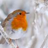 honor_reid: bird