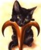 Aries-the Cat