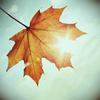 knitki userpic