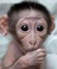 дитё обезьянка