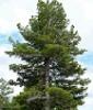 panoramov userpic
