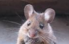 dmousey: mouse