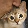 котик цв