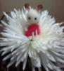 зайка в цветке