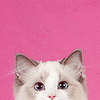 blue_ribbon03 userpic