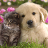 cats, собаки, Кошки, mimimi, dogs