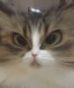 shaffle userpic