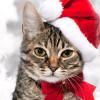 кот новогодний