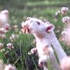 elfilosofo userpic