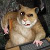 hamster_96