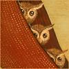 lilliarosa: Owls