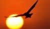 falconsunset userpic