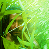 Christina: lost- sayid- before the storm