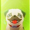 ♥ sam ♥: pug