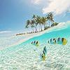 → tropical