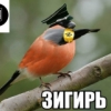 kroshka_lyapis
