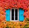 art_of_windows userpic