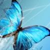 sylphidae userpic