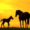leesa_perrie: Horse Foal