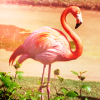 blastofserenity: animal:flamingo