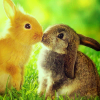 blastofserenity: animal:bunnies