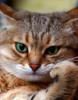 задумчивый котик