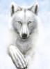 13white_wolf