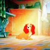{lady and the tramp} orange
