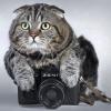 кото-фото