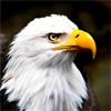 Lil Miss Morgan Dork: Eagle