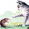 cat_n_rat