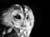 owl_stories userpic