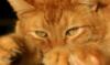 rysovin userpic