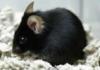 kaguya_mouse userpic