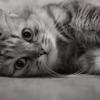 julia_buzzard userpic