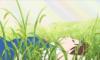 Хару на траве