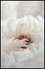 richenda_morgan userpic