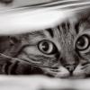 black_cat_102 userpic